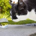 Spiel mit der Glaskugel